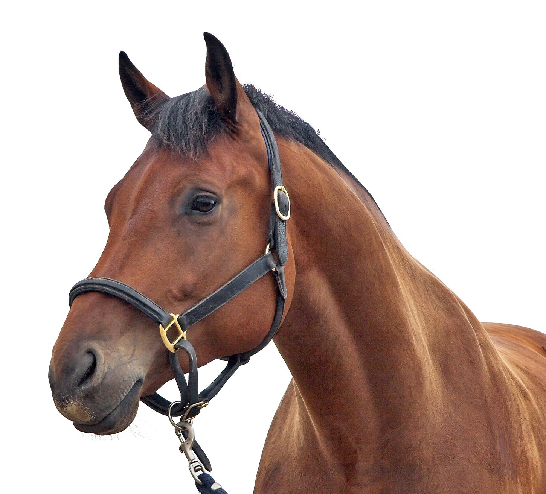 PNGPIX-COM-Horse-Transparent-PNG-Image